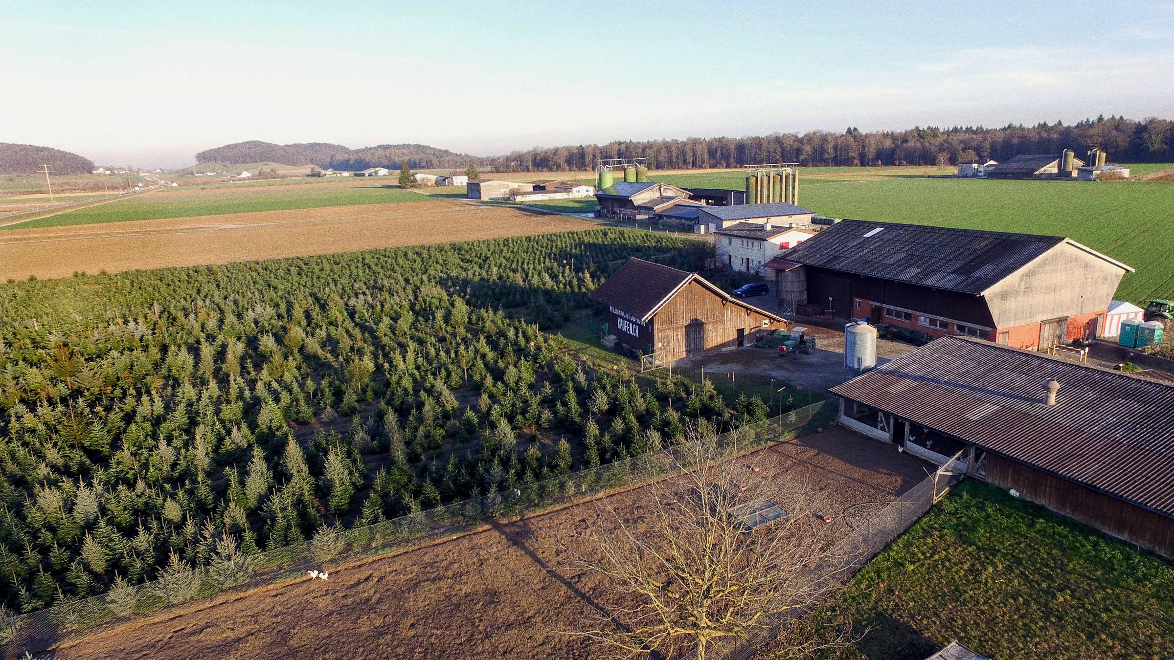 Weihnachtsbaum kaufen calw europ ische weihnachtstraditionen - Weihnachtsbaum kaufen hamburg ...